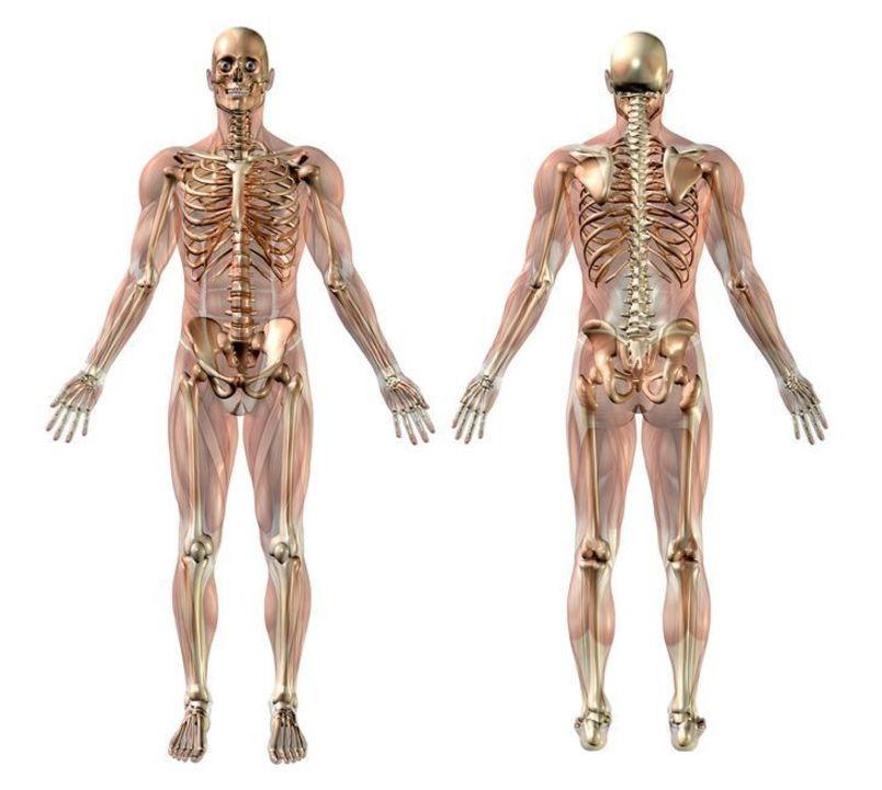 Doc preview sistema musculo esqueletico