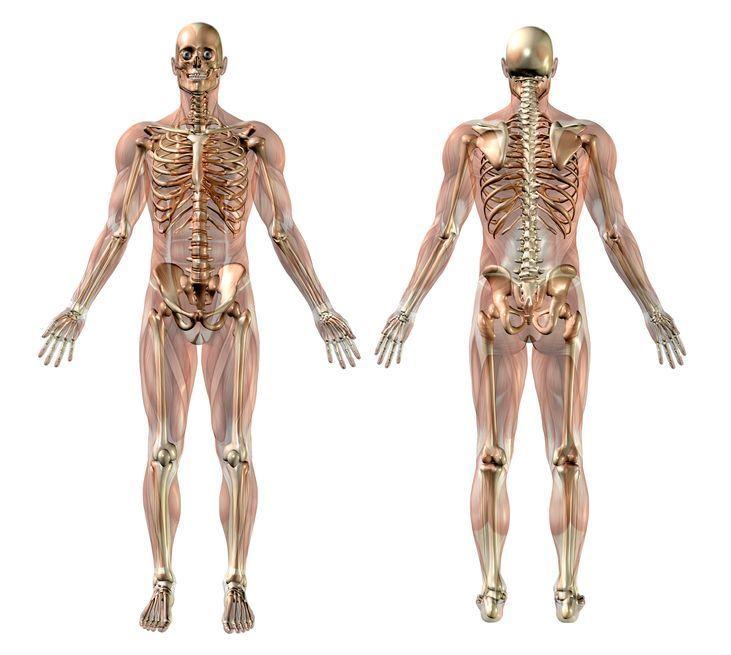 Dolores musculares y dolores de huesos