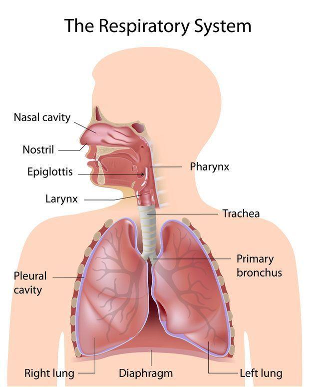 Alergias nasales, cirugia de cornetes.