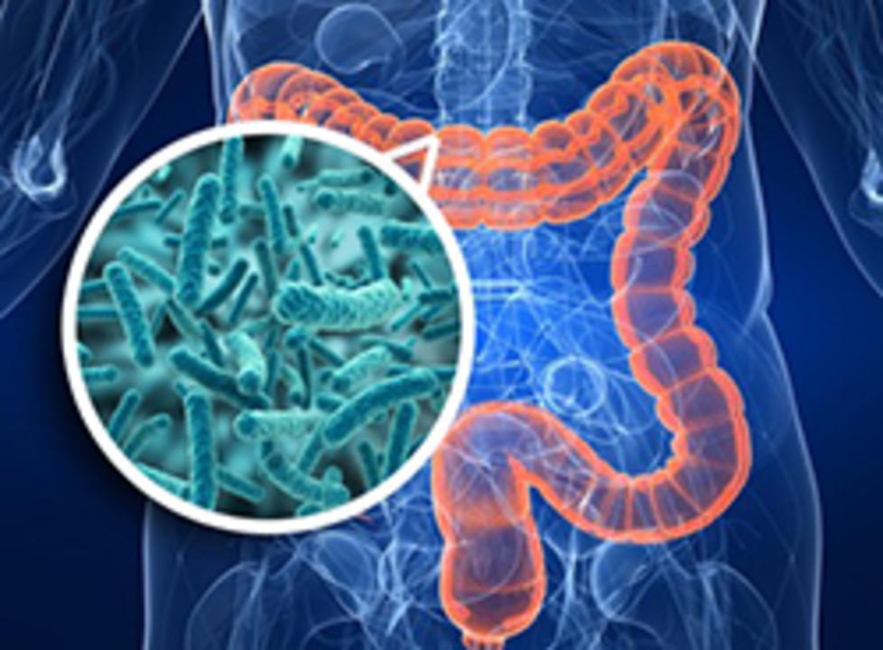 Doc preview microbiota