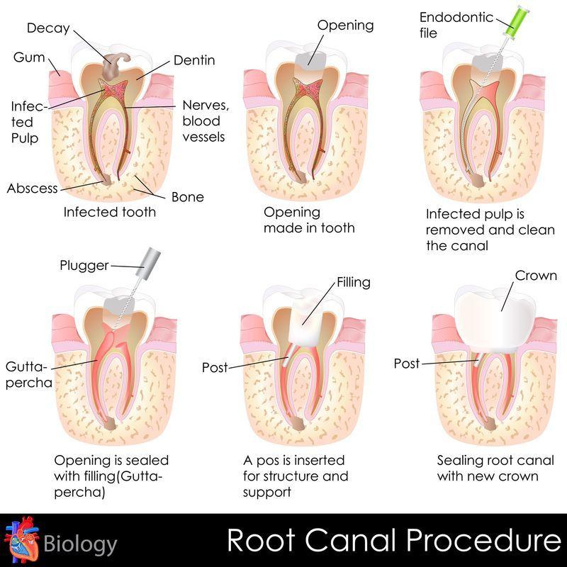 Endodoncia, Ortodoncia, periodoncia, cirugia oral