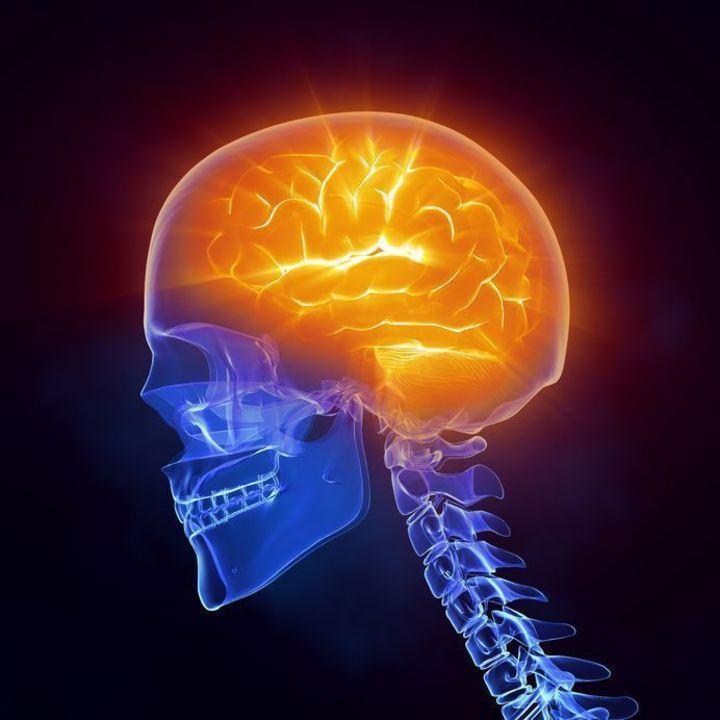 Doc preview cerebro