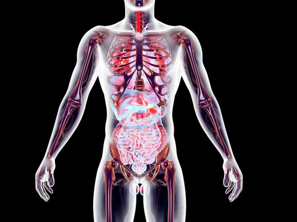 Doc preview 123 sistema endocrino masculino