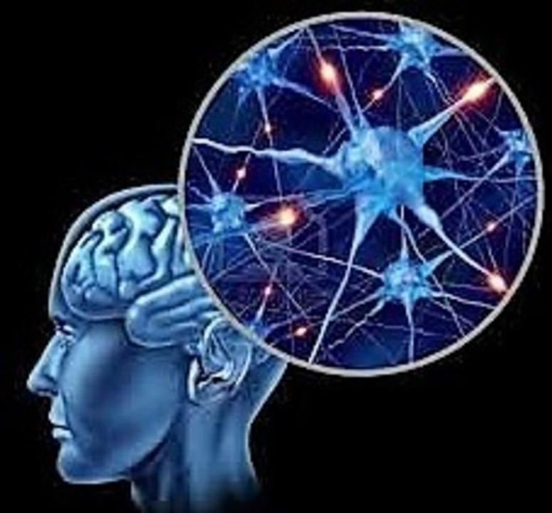 Doc preview imagen cerebro mi logo