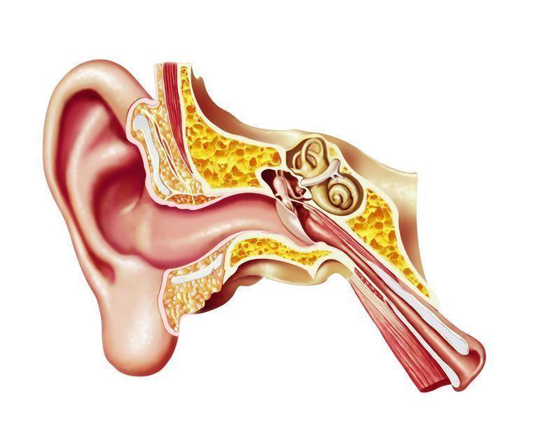 Cirugía de oído, nariz y garganta