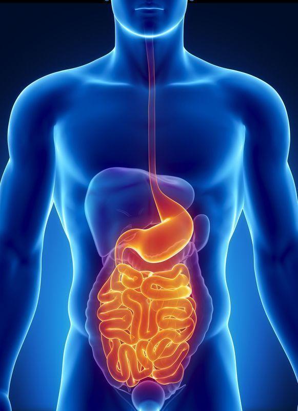 Gastroenterologia,