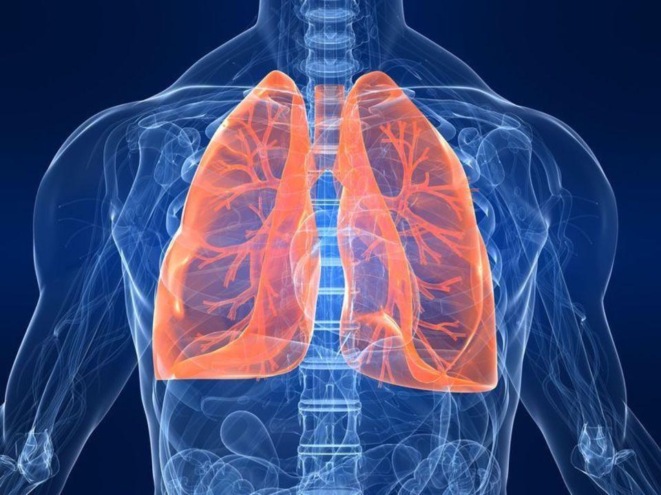 Doc preview pulmones