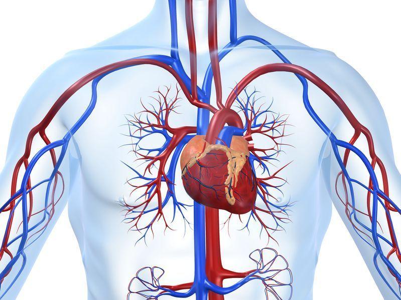 Cardiologia clinica y cardiologia intervencionista