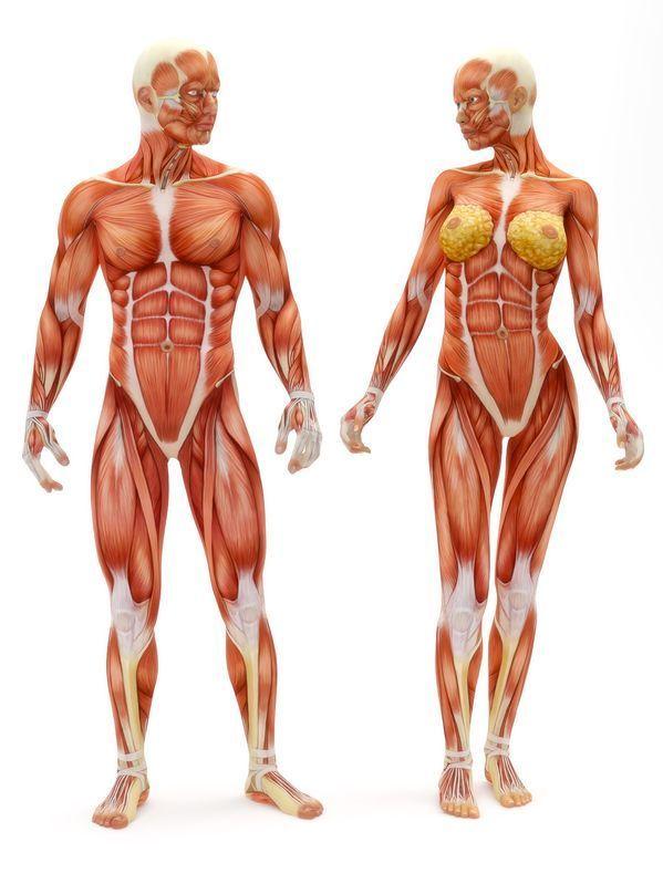 Dr. Alcalá & Asociados. Sistema Muscular Esquelético (S.M.E. ...