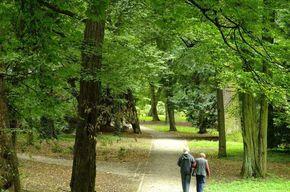 Tip list pareja madura en bosque
