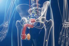 Tip list opcione prostata