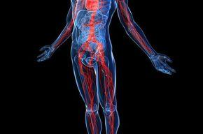 Tip list sistema cardiovascular