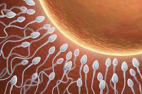 Tip list fertilidad