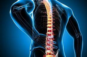 Tip_list_columna_vertebral
