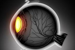 Tip list 123 anatomia del ojo