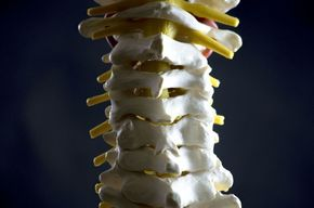 Tip_list_123_columna_vertebral