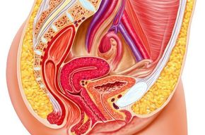Tip_list_female_reproductive_system