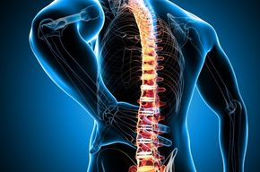 Tip list columna vertebral